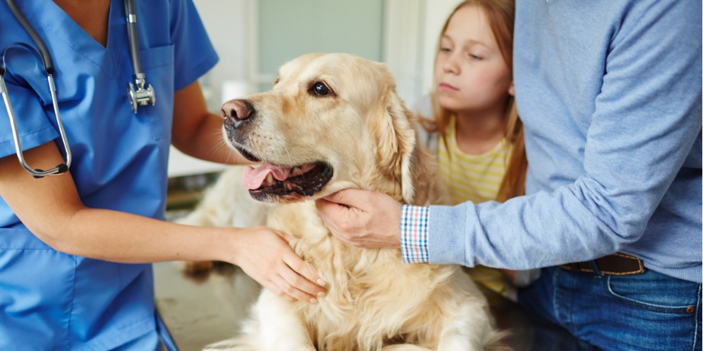 Pre-Veterinary (AS)